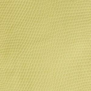 Lizard Ivory