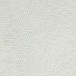 Lizard White